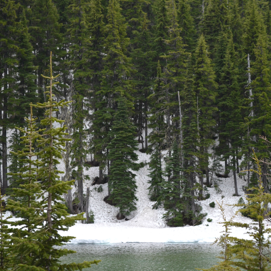 DSC_0501_PM_lake_snow_trees