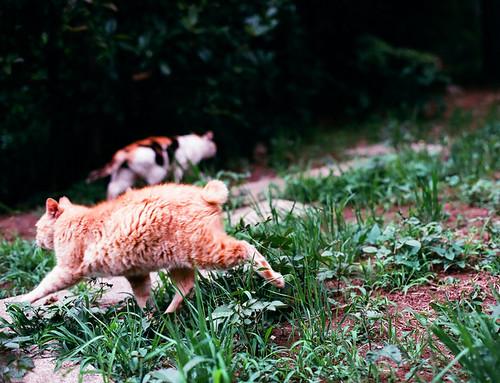 Animal_03