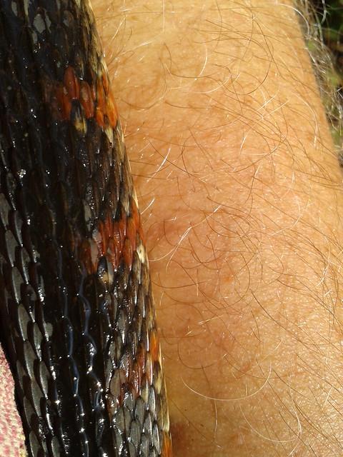 Snake on the skin