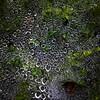 Web of dew's. #androidphotography #shotonanexus6p #doylestown