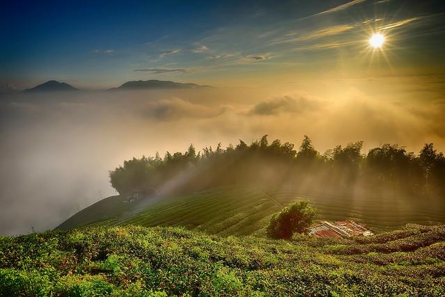 Sunset at tea farm 夕照大崙山