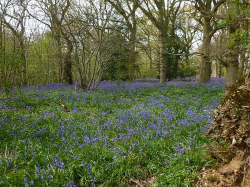 Near Sturry, Kent