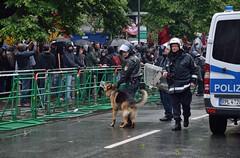 festival(0.0), demonstration(0.0), dog(1.0), pet(1.0), police(1.0), police dog(1.0),