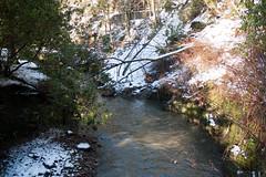 Winter 2013 (Jesmond Dene)  (20)