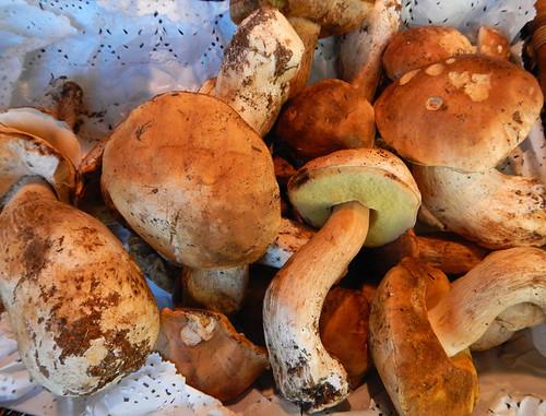 Mushrooms for sale in Madrid