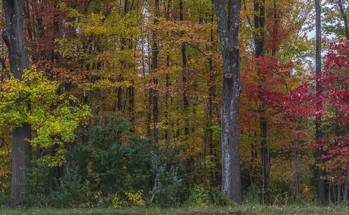 autumn connecticut enfield tamron18270 johnjmurphyiii originalnef