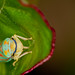 Leafhopper by digiphotonut