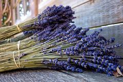 Bundle of lavendar