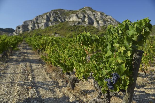 Vignoble des Baux