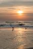 Sea gulls at the beach at sunset