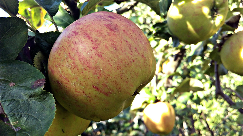 Apple day 2016-apple8