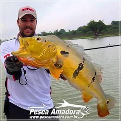 E a Amazônia continua fazendo a alegria do pescador. João Medeiros com um belo tucunare do Rio Sucunduri.  #pescaamadora #pescaesportiva #pesqueesolte #pescador #amazonia #riosucunduri #baitcast #bait #flyfishing #fly #tucunare #tucuna #amazon #monsterfis