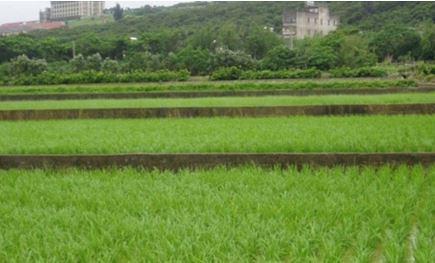 混凝土化的田埂