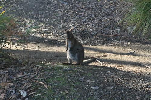 Tasmania12