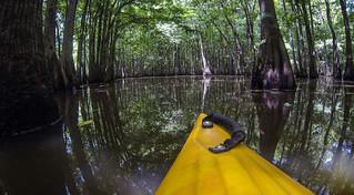 Sparkleberry Swamp (11 of 21)