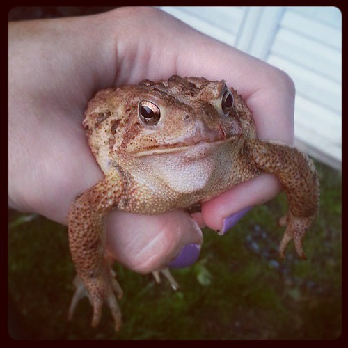Look what the kids found. #toad
