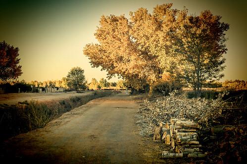 wood autumn newmexico fall landscape lomo albuquerque trail nm vignette grantcondit