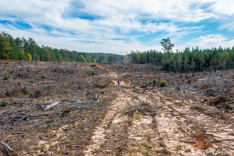 Alabama wilcox county catherine - Unitedstates Camden Alabama Larrybell Wilcoxcounty Larebel Larebell Mccaskillcemetery