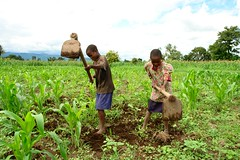 Peter Mcharo's two children digging their father's maize field in Kibaigwa village, Morogoro Region, some 350km from Dar es Salaam. Mcharo is one of the farmers who have benefitted from Conservation Agriculture. Credit: Orton Kiishweko/IPS