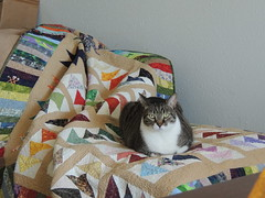 Claiming the New Quilt
