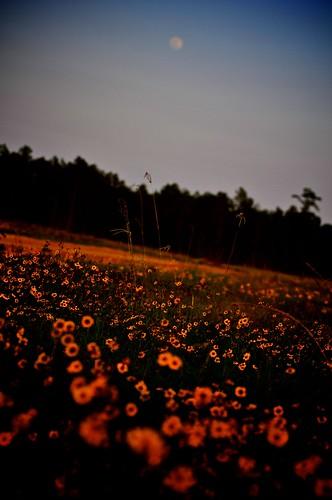 flowers moon spring texas