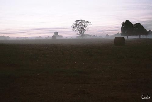 tree film field sunrise 35mm minolta farm