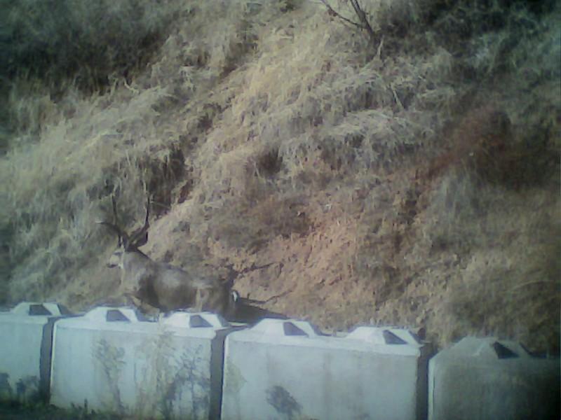 buck11