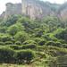 Tea garden in Wuyishan.jpg