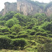 Jardin à Wuyishan