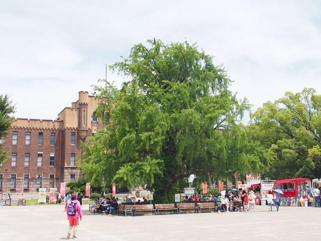 舊大阪市立博物館門前的大銀杏樹