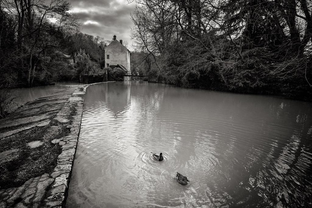 Le moulin et les canards