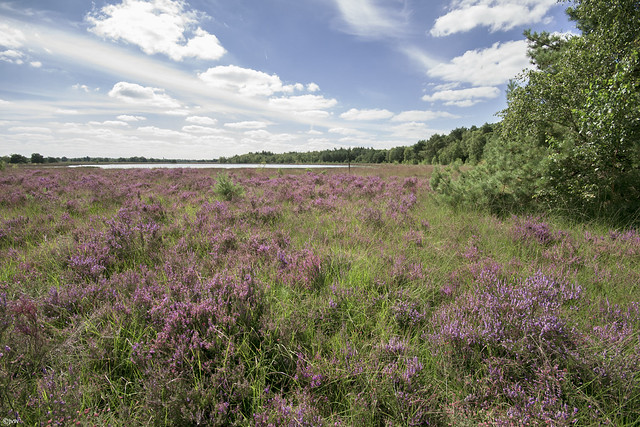 What a wonderful view over the heather