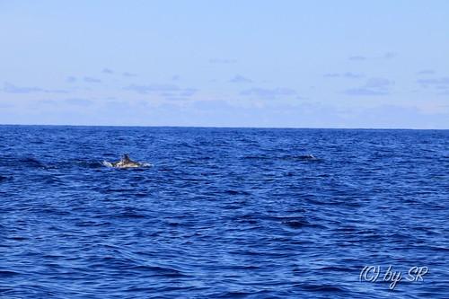 Azores2014_0390