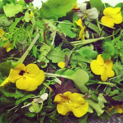 Le mesclun diabolique des Jardins sauvages fait les plus jolies salades