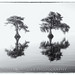 Cypress Trees & Reflection BW by Michael Pancier Photography