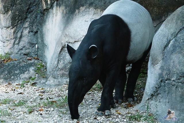 Zoo Miami 14.11.2014 193