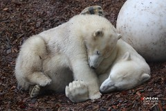 Nela&Nobby - The Cuddling Twins