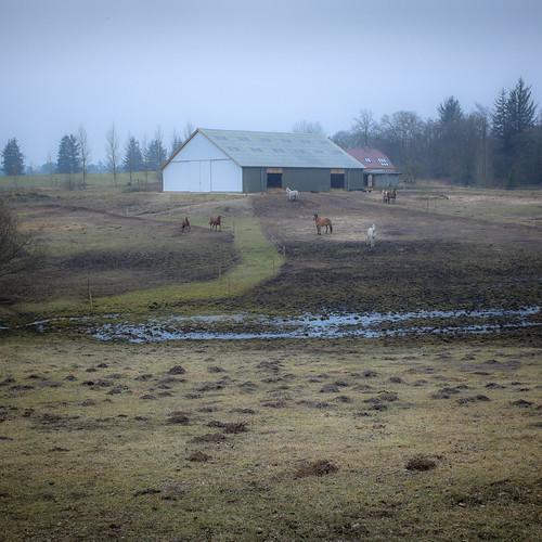 denmark danmark hest winterbreak pwd vinterferie holstebro vestreplantage poulwernerdam