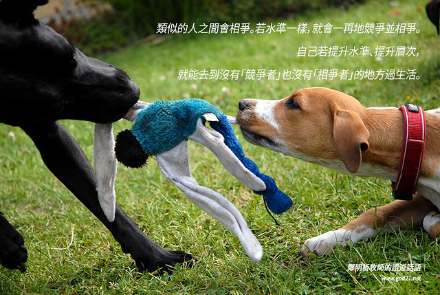 how to make a dog let go of another dog