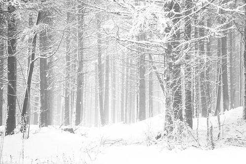winter snow hiver neige franchecomté forêt bois doubs arcsouscicon
