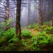 Appalachian Trail Blue Ridge Mountains - Forest Light by Dave Allen Photography
