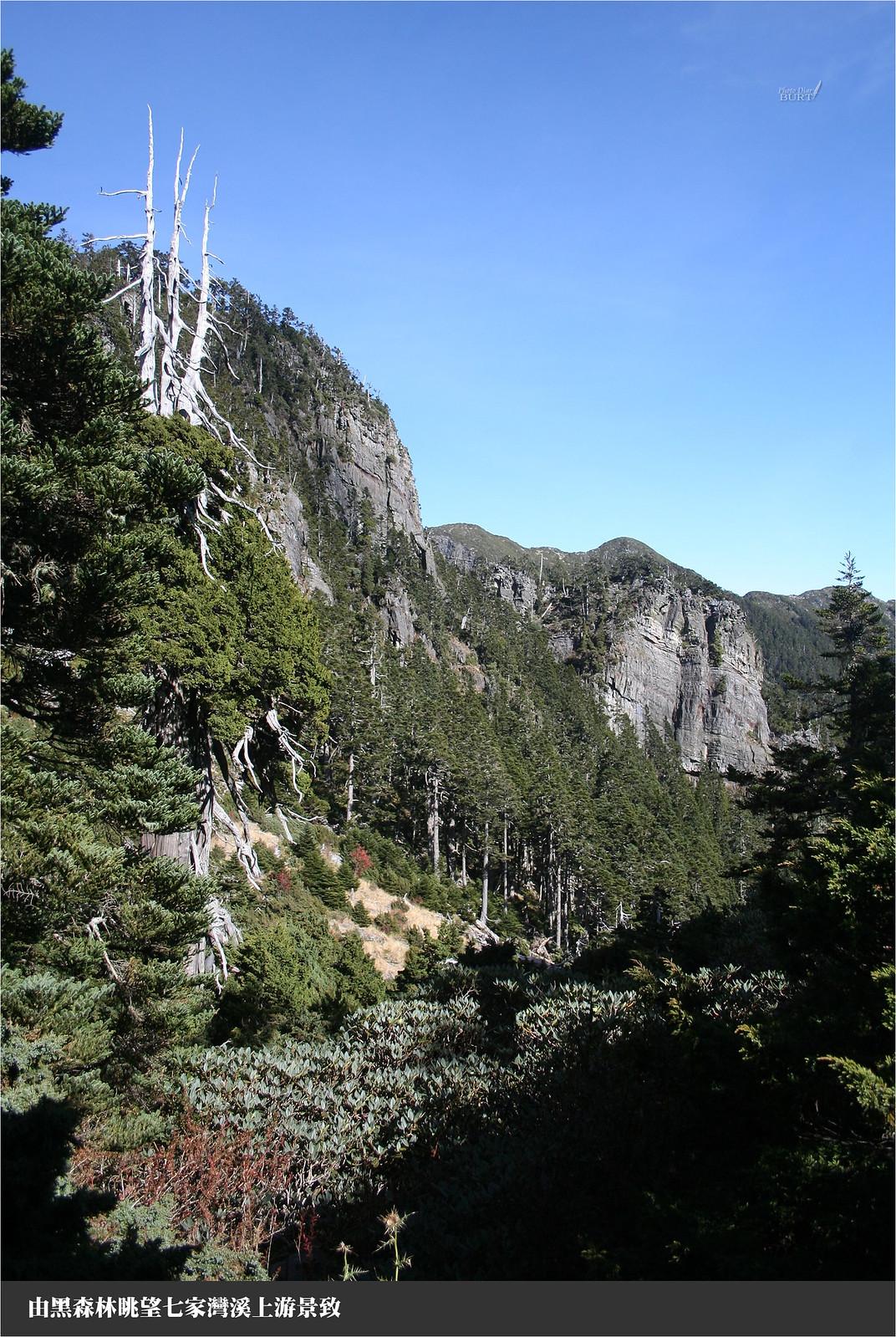 由黑森林眺望七家灣溪上游景致