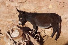 mare(0.0), horse(0.0), mustang horse(0.0), animal(1.0), mane(1.0), donkey(1.0), mule(1.0), pack animal(1.0), fauna(1.0),