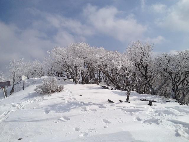 天狗岩直下の展望地 樹氷の森