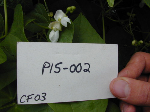 P15-002 CF03 Fl2
