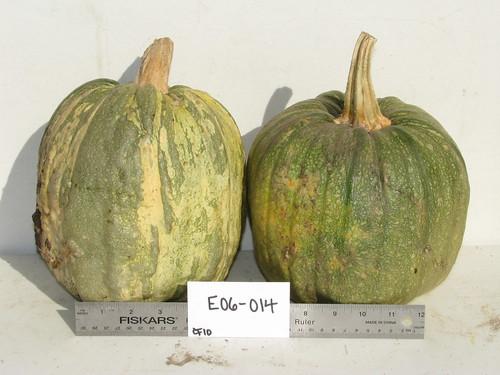 E06-014 CF10 Fr8