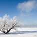 Tree by the River Covered with Hoar Frost. by Rob Huntley Photography - Ottawa, Ontario, Canada