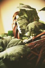 150126-plant-wicker-basket.jpg