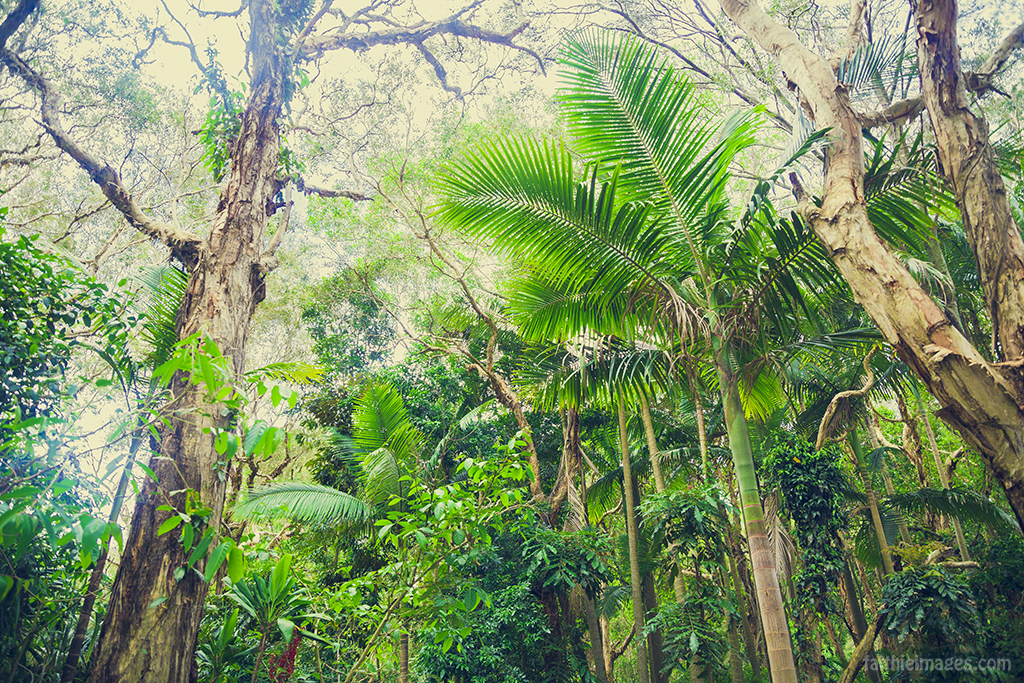 jungle adventures and natural beauty of Queensland