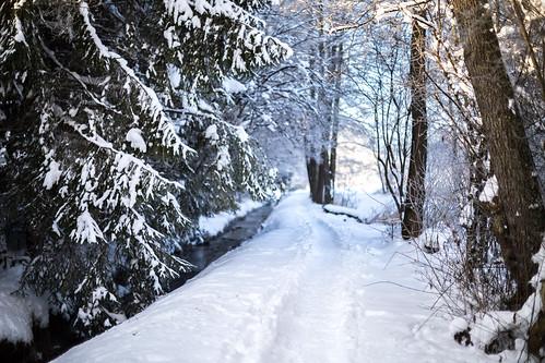 wood winter light sun snow green sunrise canon germany bayern 50mm dawn path chiemsee prien 6d canonef50mmf14usm